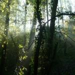 ParcodelPiacenziano,boschimesofili fotoDanielaBruzzi
