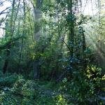 ParcodelPiacenziano,boschimesofili fotoCesarePozzoli