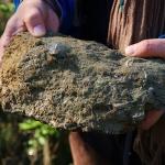 ParcodelPiacenziano,fossili fotoCesarePozzoli
