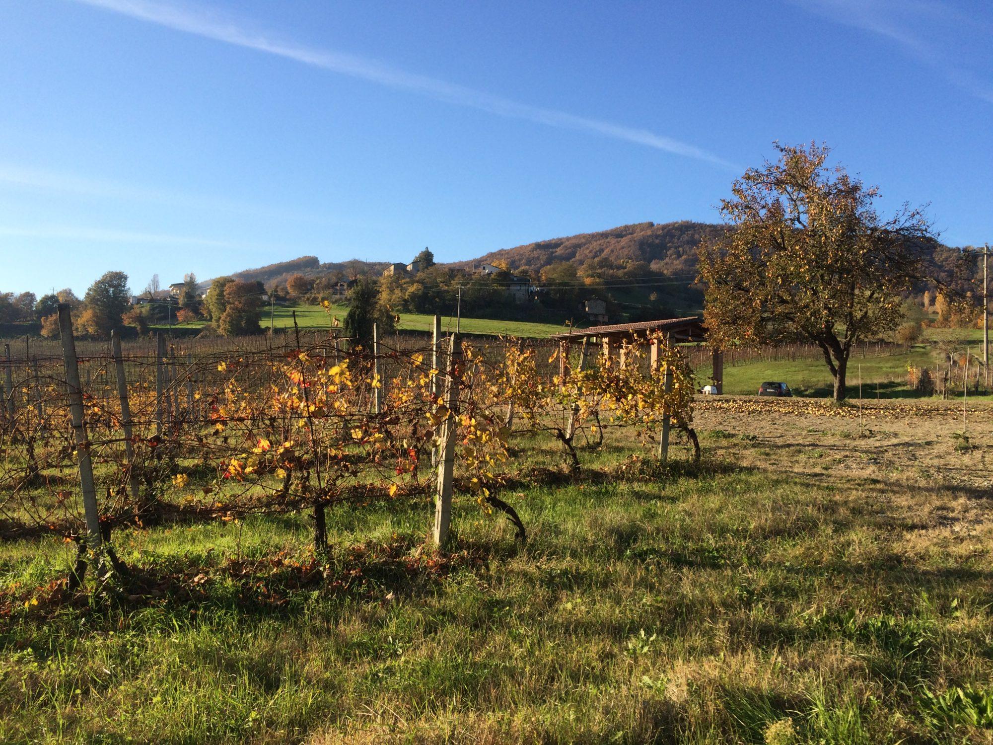 Vigneti e colline di Serravalle