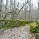 Sentieri con muretti a secco in Val Noveglia