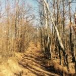 lungo il sentiero del M.Santa Cristina