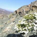 vegetazione ofiolitica