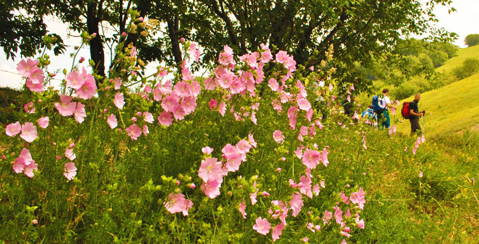 Trekking tra le splendide fioriture
