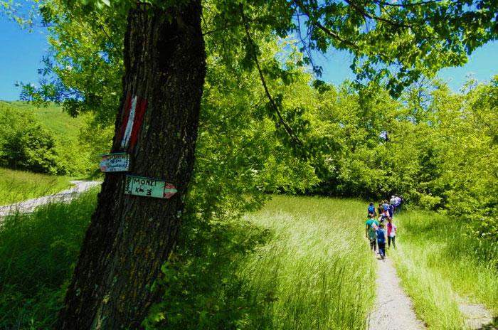 Uno splendido sentiero nella natura
