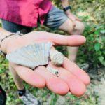 fossili piacenziano