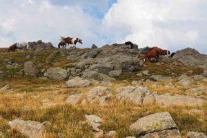 Cavalli allo stato brado sul Monte Aiona