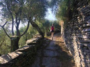 Sentiero negli ulivi con enormi lastre di pietra